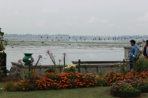 the view of Dal Lake from the garden